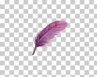 Bird Feather Purple PNG