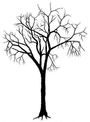Tree Trunk Png Images Tree Trunk Clipart Free Download
