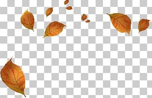 Leaf Autumn PNG
