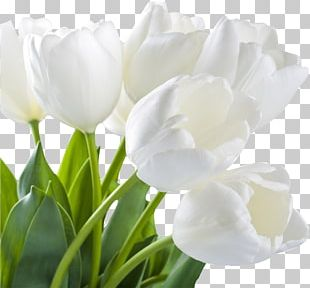 Tulip Artificial Flower Stock Photography Flower Bouquet PNG