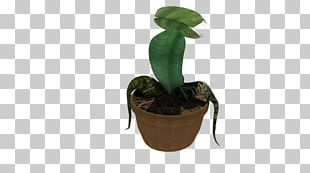Flowerpot Leaf Houseplant PNG
