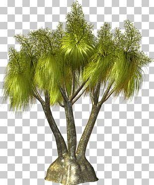 Tree Arecaceae Plant PNG