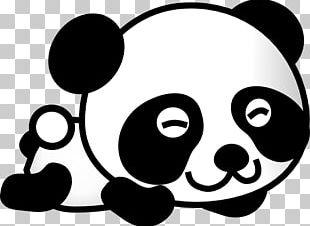 Giant Panda Bear Baby Pandas Drawing PNG