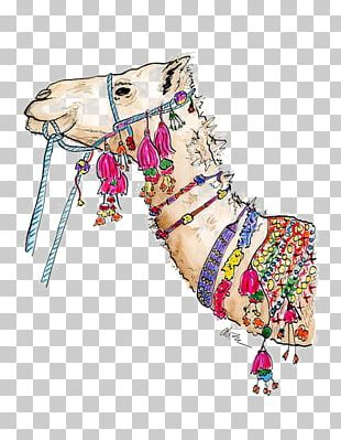 Camel White Box Drawing Illustration PNG