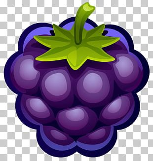 Muffin Blueberry Pie Fruit PNG