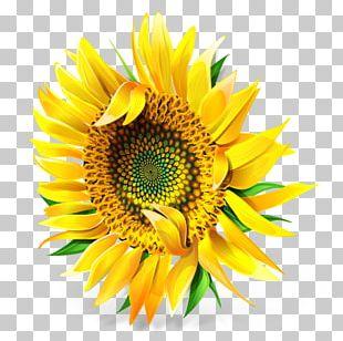 Sunflower Seed Pollen Petal PNG