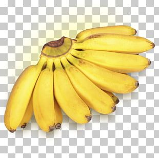 Lady Finger Banana Dwarf Cavendish Banana Cooking Banana Fruit PNG