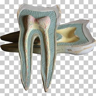 Dentistry Human Tooth Jaw PNG