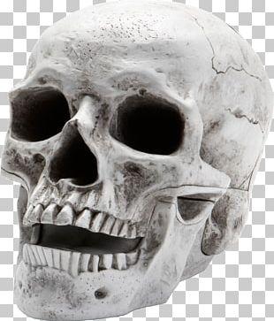 Skeleton PNG