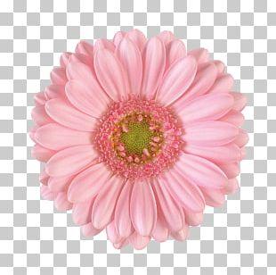 Transvaal Daisy Flower Bouquet Chrysanthemum Garden Roses PNG