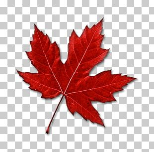 Canada Maple Leaf PNG