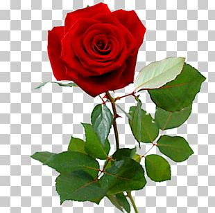 Rose Red Valentine's Day Cut Flowers Flower Bouquet PNG