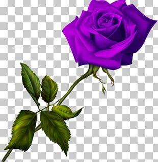 Blue Rose Garden Roses PNG