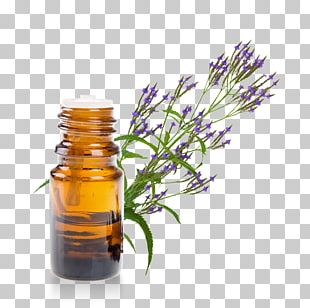 Essential Oil Herb Thymol Eucalyptus Oil PNG