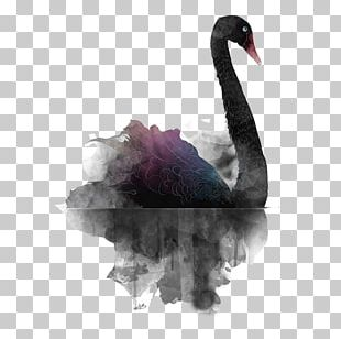 Black Swan Theory PNG