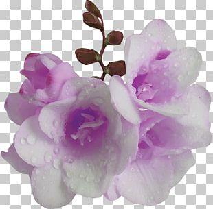 Flower Violet Purple Mauve PNG