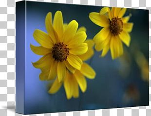 Macro Photography Wildflower PNG