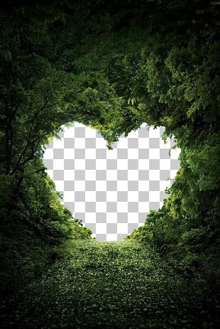 Heart Nature Valentine's Day Love PNG