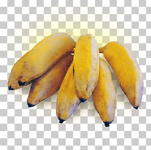 Dwarf Cavendish Banana Cooking Banana Fruit PNG