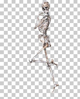 Human Skeleton Bone Human Body Skull PNG