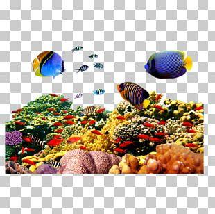Aquarium Fish PNG