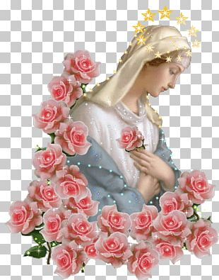 Immaculate Heart Of Mary Garden Roses Mary Help Of Christians Madonna PNG