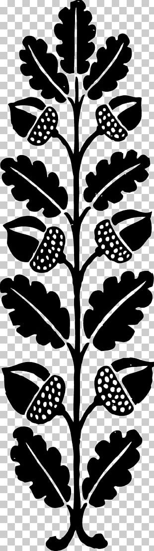 Acorn Black And White PNG