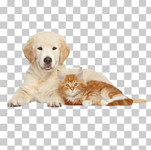 Cat Veterinarian Royal Canin Golden Retriever Great Dane PNG