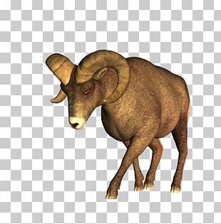 Barbary Sheep Cattle PNG