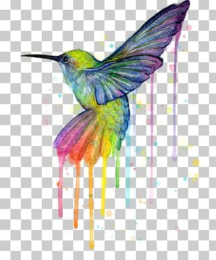 Hummingbird Watercolor Painting Art Canvas Print PNG