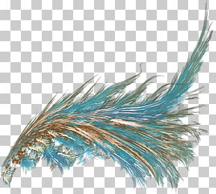 Feather Butterfly Angel Wing Verreaux's Eagle PNG