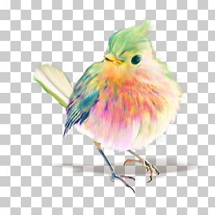 Budgerigar Bird Watercolor Painting Drawing PNG