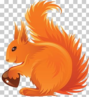 Drawing Acorn Red Squirrel PNG