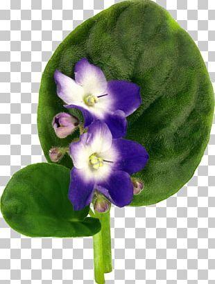 Violet Flower Drawing PNG