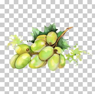 Watercolor Painting Fruit Drawing PNG