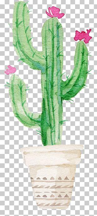 Cactaceae Succulent Plant Watercolor Painting Printmaking PNG