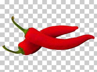 Habanero Bird's Eye Chili Tabasco Pepper Serrano Pepper Cayenne Pepper PNG
