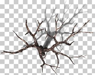 Tree Branch Plant Trunk PNG