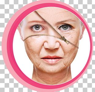 Anti-aging Cream Life Extension Ageing Skin Care Wrinkle PNG