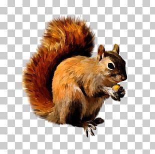 Squirrel Scrat PNG