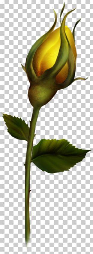 Bud Rose PNG