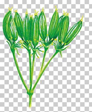 Flowering Plant Plant Stem PNG