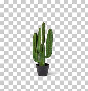 San Pedro Cactus Saguaro National Park Portable Network Graphics PNG