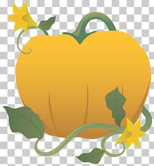 Pumpkin Common Grape Vine Cucurbita PNG