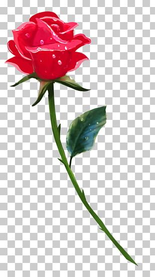 Rose Drawing Flower Stock Photography PNG