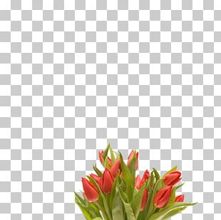 Tulip Flower Bouquet Desktop PNG