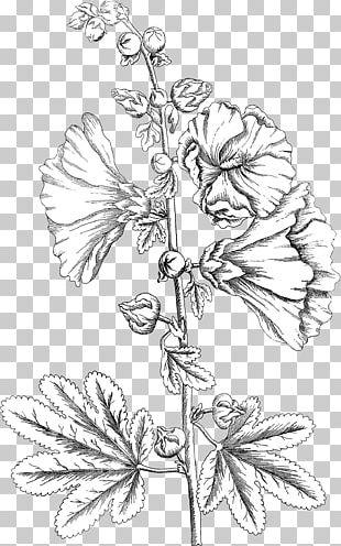 Floral Design Twig Leaf PNG