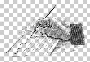 Paper Writing Quill Pen PNG