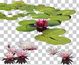 Petal Leaf Flowerpot PNG