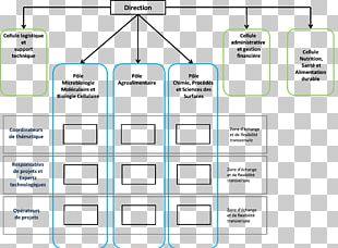 Organizational Chart Institut De Recherche LABIRIS French Community Commission French Community Of Belgium PNG